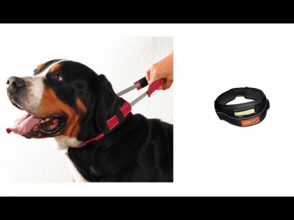 Premium Collar Collier Laisse Courte Chien Medium 1 pièce