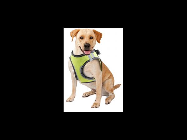 Doggy Safety Harness Harnais de Sécurité Chien